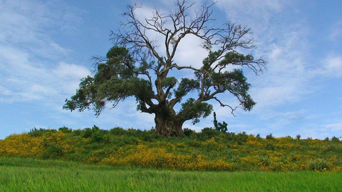 Faire des découvertes surprenant à travers les merveilles de l'Éthiopie