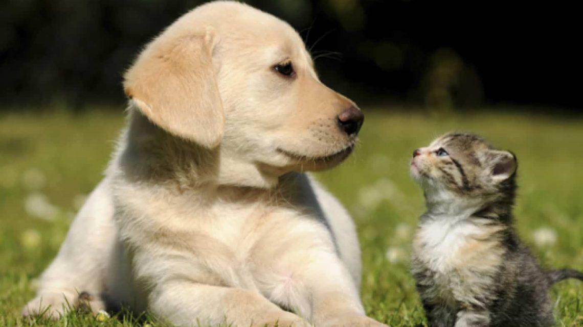 Voulez-vous mieux comprendre les animaux, c'est par ici